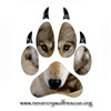 nevercrywolfrescue.org